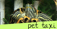 pet taxi transportation